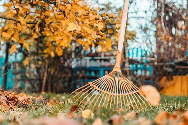 Trädgården: Vad ska göras på hösten? - Bygga hus i Göteborg.